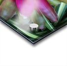 Bromeliad Acrylic print