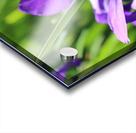 Purple Iris Impression Acrylique