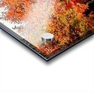 Autumn Golden Colours Umbria Acrylic print