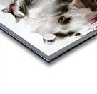 Feline Chow Time Acrylic print