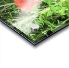Flowers (55) Acrylic print
