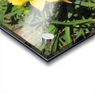 Flowers (35) Acrylic print