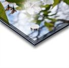 Soft-Focus Flower Scene Acrylic print