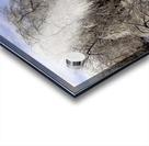 Matin glacé- Iced morning Acrylic print