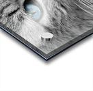 cat animal cat portrait mackerel Acrylic print