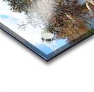 The Pine Tree I Acrylic print