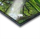 Oak Alley Plantation - HDR Acrylic print