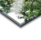 Larrys Tree Acrylic print