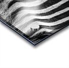 Zebra Details Acrylic print