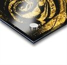 Golden rose Acrylic print