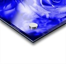 Rose blue Acrylic print