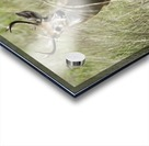 White Tailed Dear Acrylic print