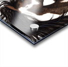 Pinto Horse Acrylic print
