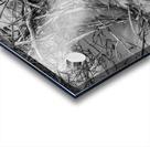 Bird Tracks ap 1605 B&W Acrylic print