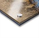 Canada Geese ap 2779 Acrylic print