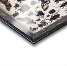 Beetles Acrylic print