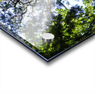 Skyview Canopy Acrylic print