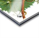 Grape Spanna Antique Art Kitchen Art Grapes Vintage Grapes Pic Grape Vine Grape Leaves Winery Spanna Grapes Wine Blued 02Element 3 Acrylic print