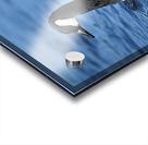 Canada Goose on water Acrylic print