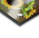 It's What Sunflowers Do - Flower Art by Jordan Blackstone Acrylic print