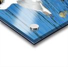 Yawning Gull Acrylic print