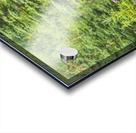 Bull moose in velvet, Kincaid Park, Anchorage, Southcentra Alaska, summer Acrylic print