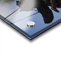 Cherub Silhouette Acrylic print