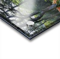 Dewerstone Woods Acrylic print
