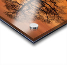 Tree Against A Sunset Sky, Nottinghamshire, England Acrylic print