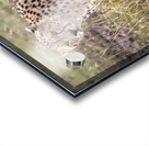 Cheetah (Acinonyx Jubatus), Masai Mara National Reserve, Kenya, Africa; Cheetah On The Prowl Acrylic print