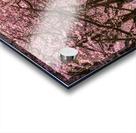 Cherry Blossom in a Park Acrylic print