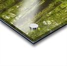 A Lush Forest; Tofino, British Columbia, Canada Acrylic print