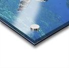 green sea turtle swimming in ocean sea Acrylic print