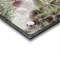 Cactus Flower VP2 Acrylic print
