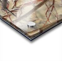 Twigs in the Sandia Mountains VP1 Acrylic print