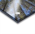 Tree Tops Near Grassi Lake Trail, Alberta Acrylic print