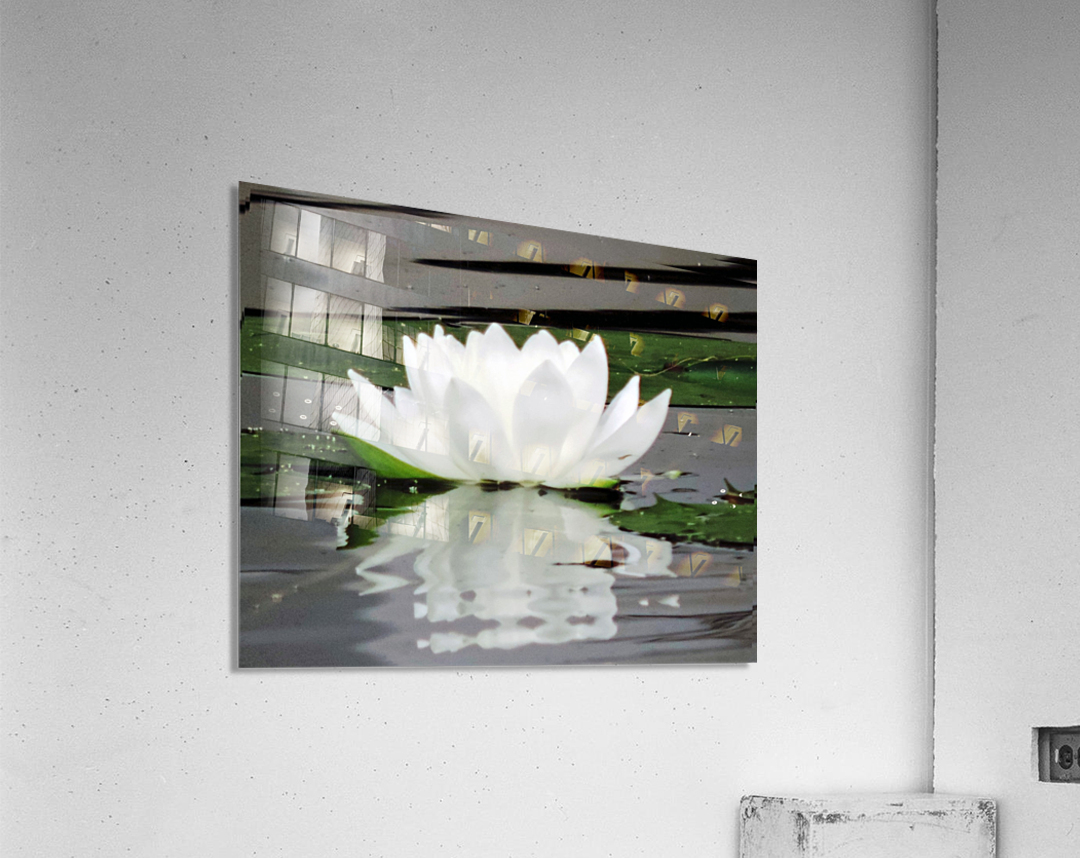 FloweringLilyPad  Acrylic Print