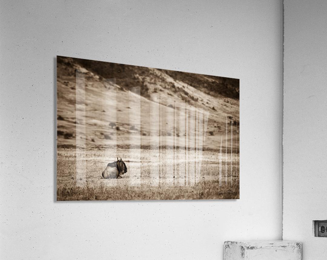 La solitude du gnou  Acrylic Print