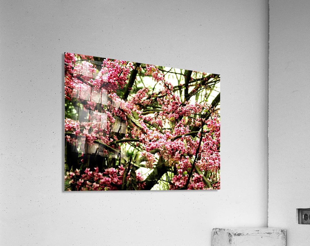 sofn-F90F4A6F  Acrylic Print