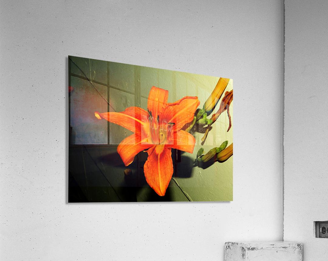 sofn-D014FA2F  Acrylic Print