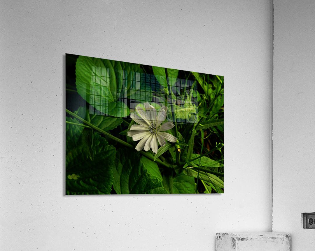 sofn-1C6EA3DA  Acrylic Print