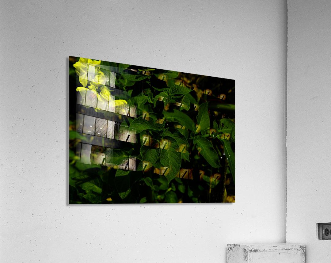 sofn-FC20B68A  Acrylic Print