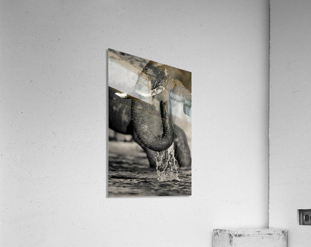 Thirst  Acrylic Print