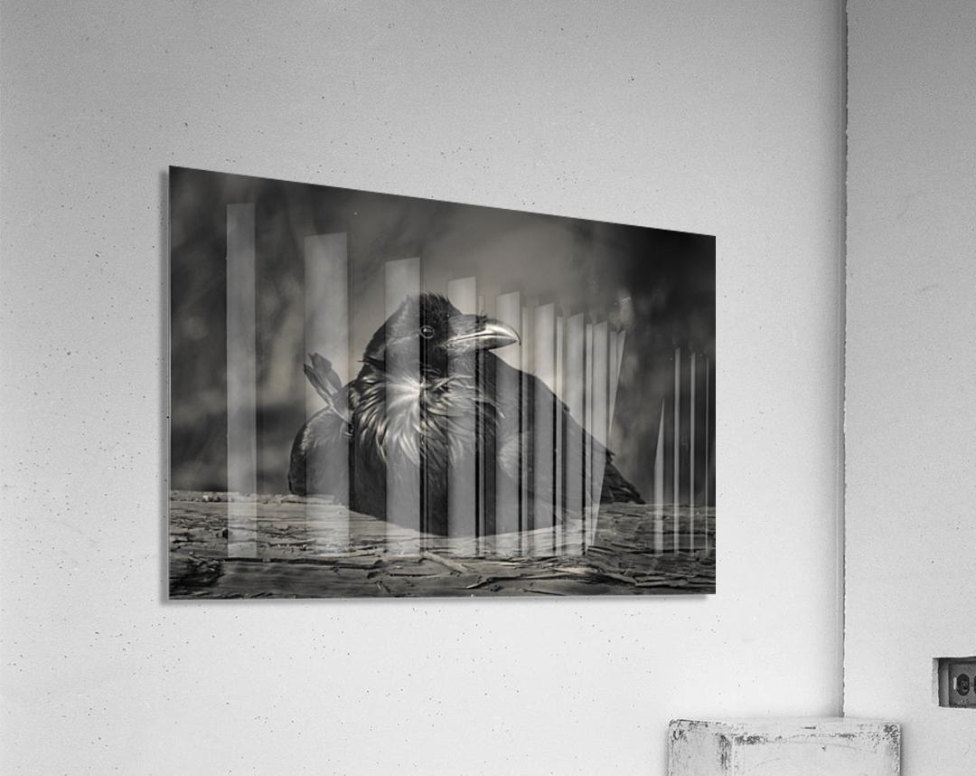 Jabba the Raven  Acrylic Print