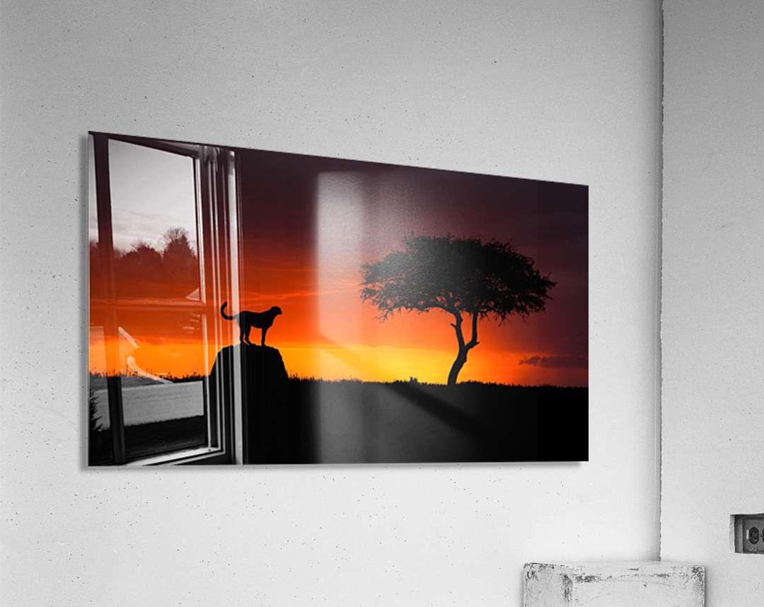 Looking for Something  Acrylic Print
