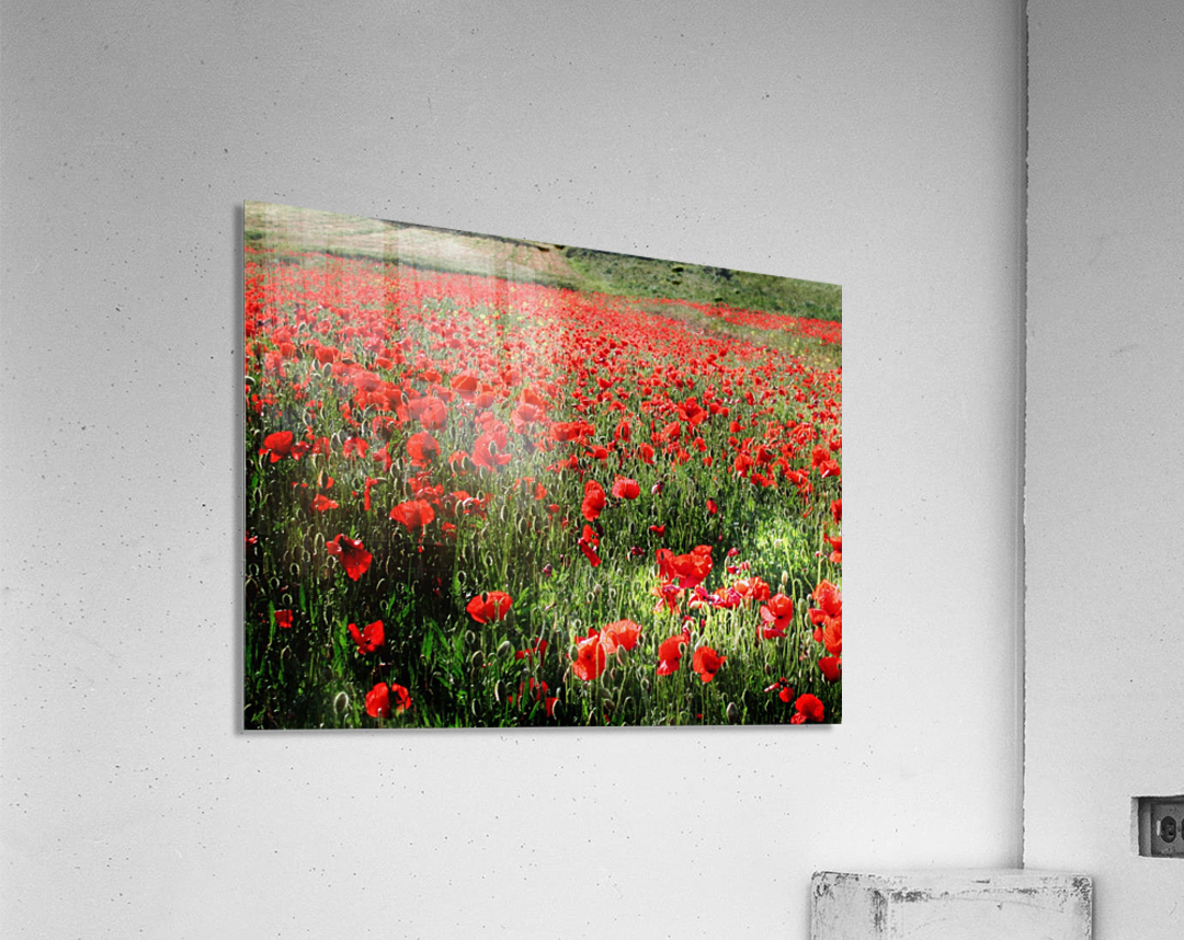 Rolling Fields with Poppies  Acrylic Print