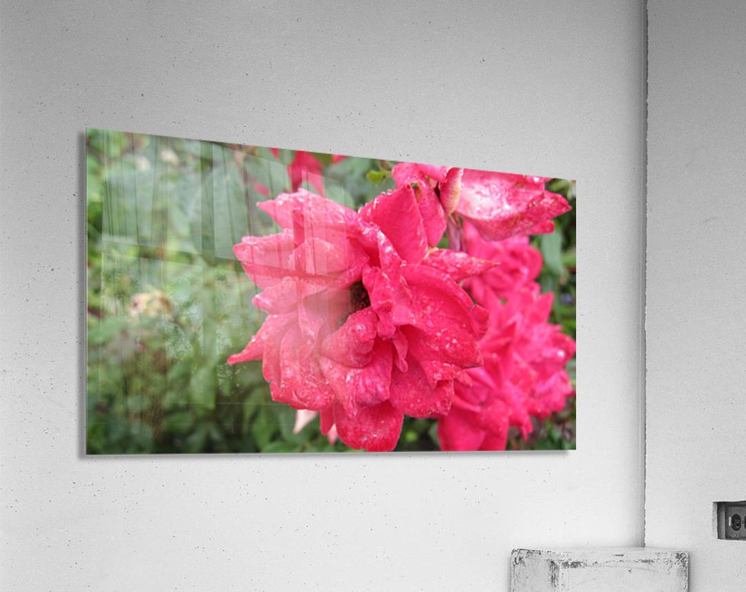 Flower (9)  Acrylic Print