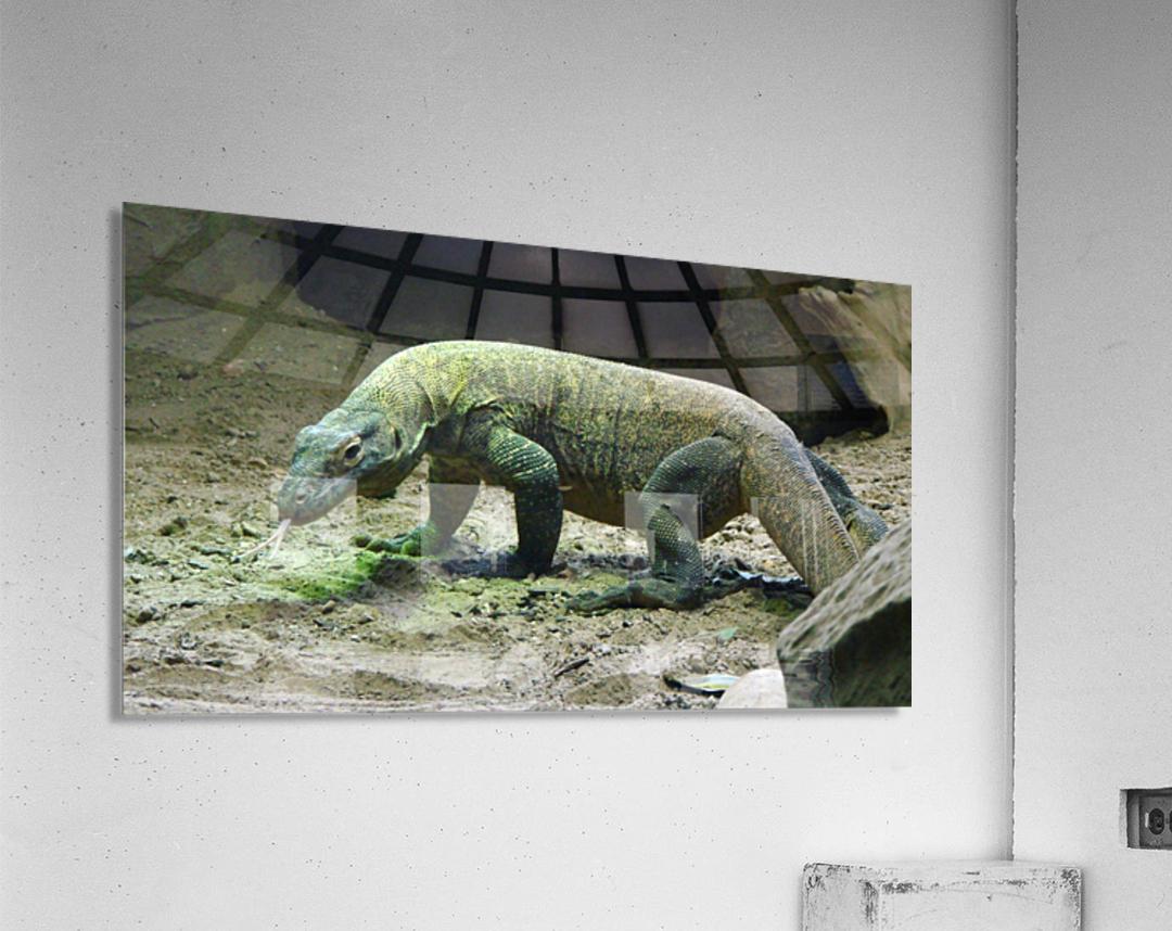 komodo dragon komodo lizard reptile  Acrylic Print