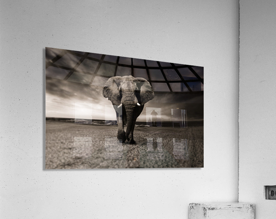 elephant animal africa safari  Acrylic Print