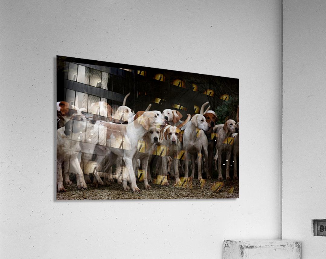 dog herd canine animal pet hounds  Acrylic Print